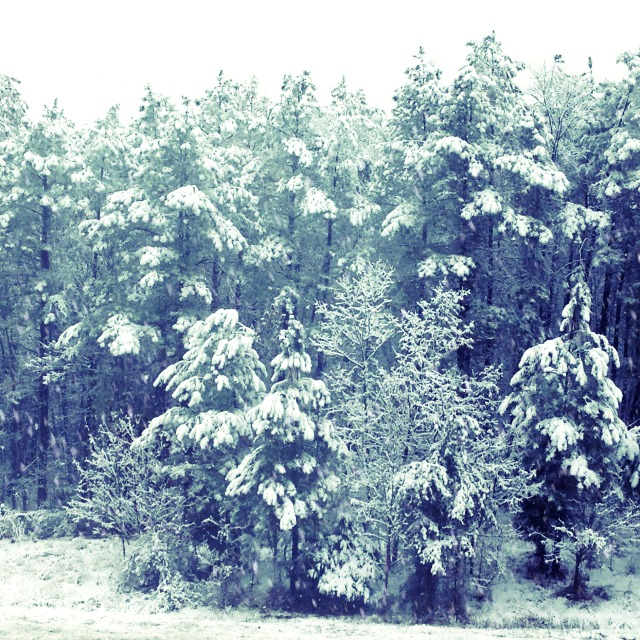 snow trees effect